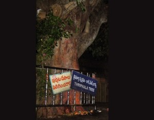 srisailam-temple-tree
