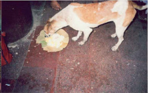 Prasada taking by Dog at the time of Annadana